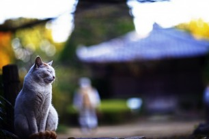cat-in-the-temple