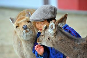 japanese-dears-givin-a-kiss