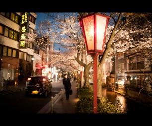 sakura-street-tokyo