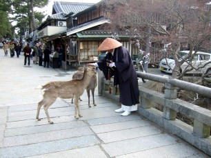baby-deer-with-japanese-monk