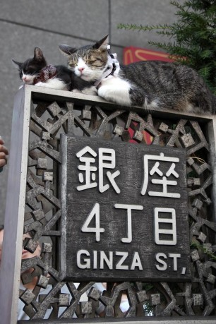 Cats-in-Ginza-Tokyo
