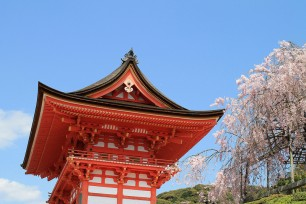Gate-and-Sakura