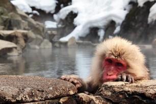 Jigokudani-Monkey-Park-Nagano
