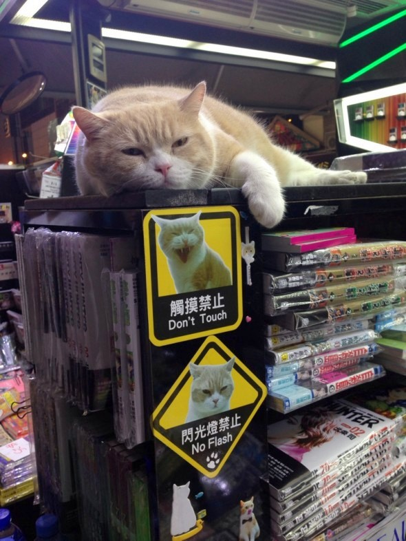 protecting-the-store