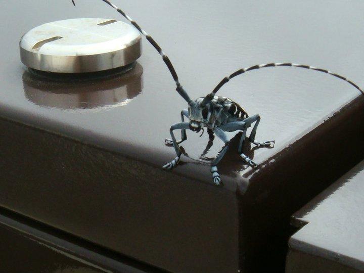 bug-in-japan