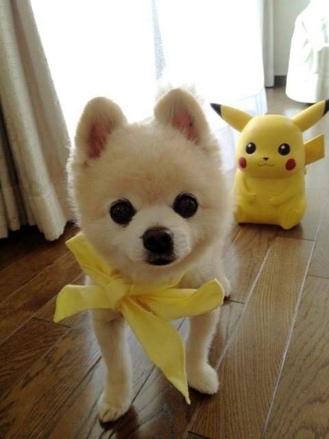cutie-pup-with-pika
