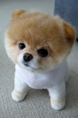 Funny-Kawaii-Puppy
