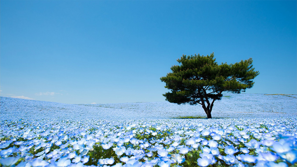 Huge-Sea-of-Blue-Japan
