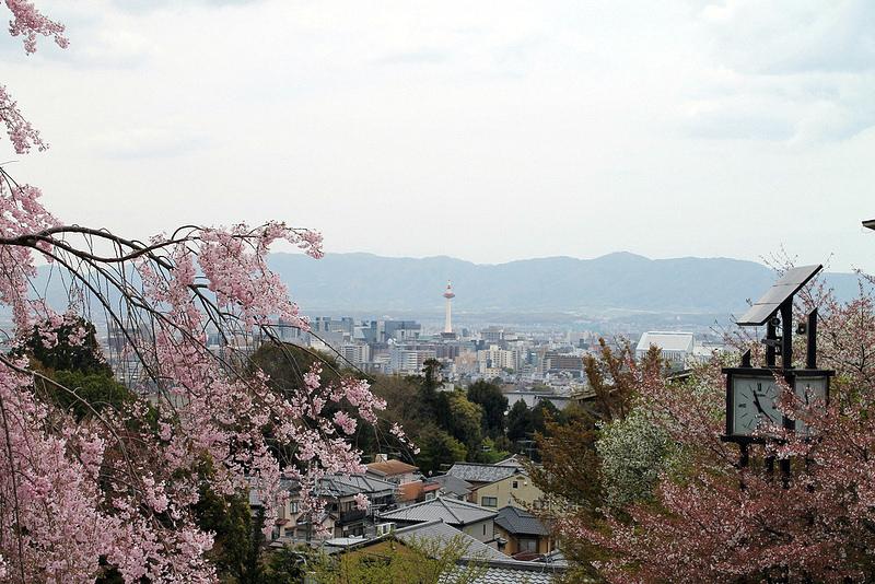 Sakura-Cityscape
