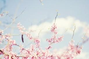 Clouds and Sakura