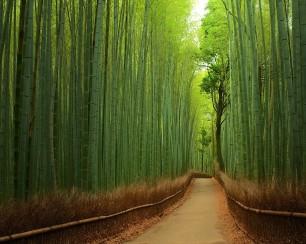 Bamboo-Path