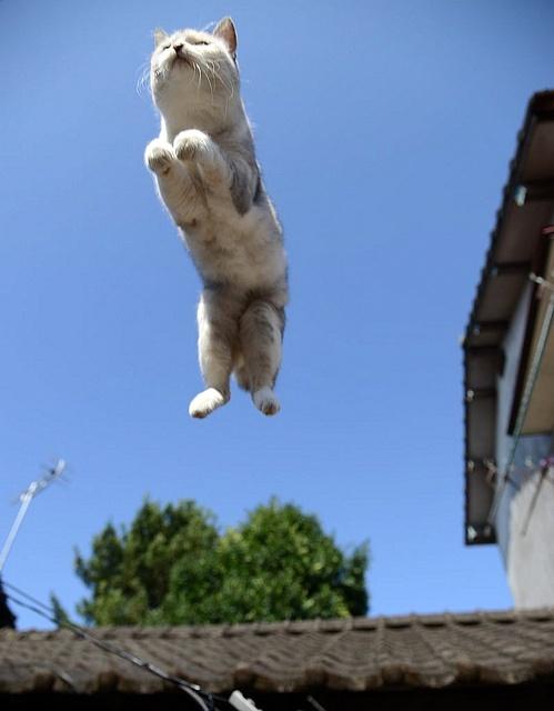 Cat-Jumpin