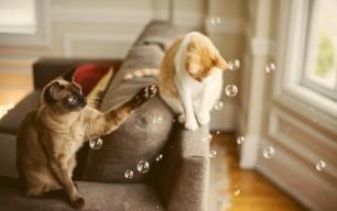 Cats-Hangin