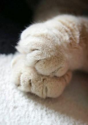 Cutie-Paws