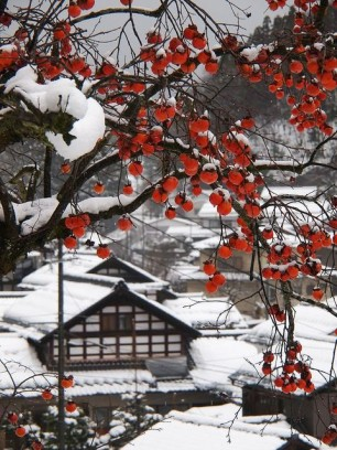 Japan-in-Winter