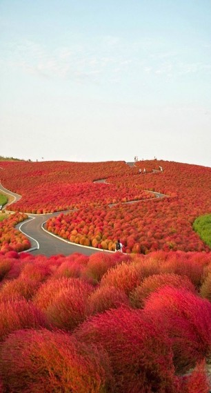 Red-Fields