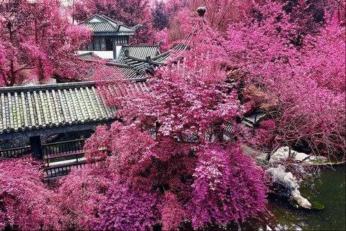 Covered in Sakura