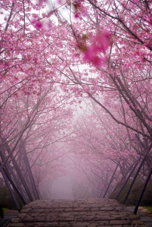 Misty Japan