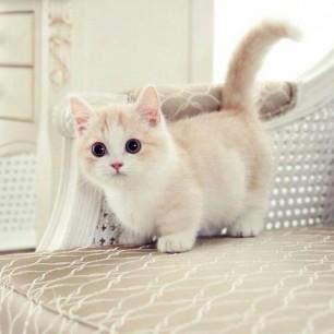 Such Cuteness
