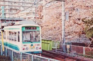 Amazing Sakura Train