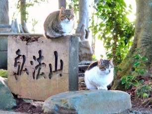 Japanese Cats Lazing