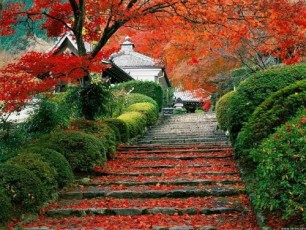Amazing Japanese Autumn