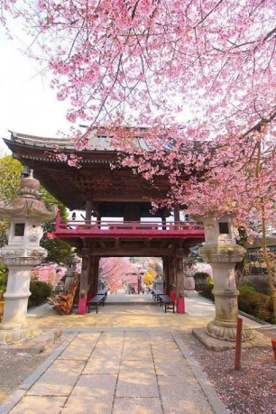 Sakura Temple Entrance