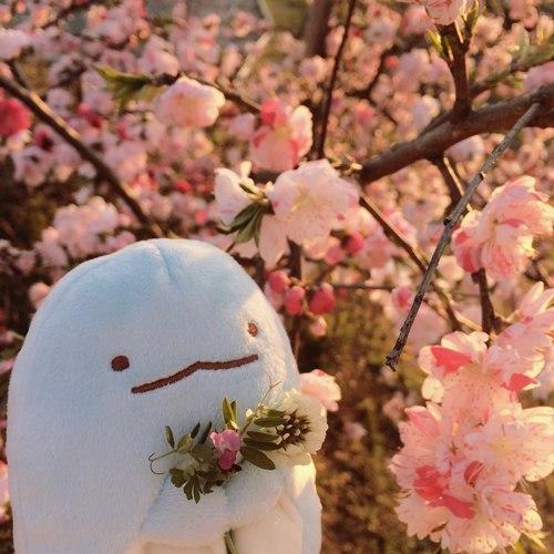 Sakura Plush Offer