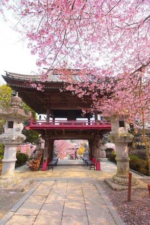 Sakura Entrance