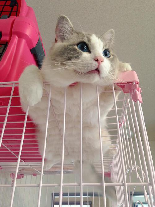 Cutie Pink Cate