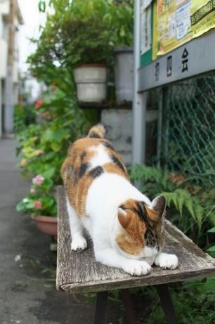 Sprawlin Kitty