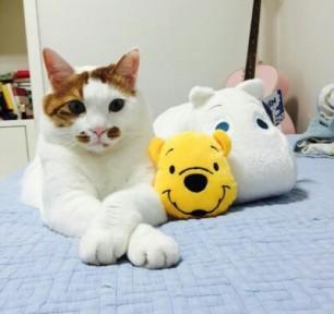 Cute Neko