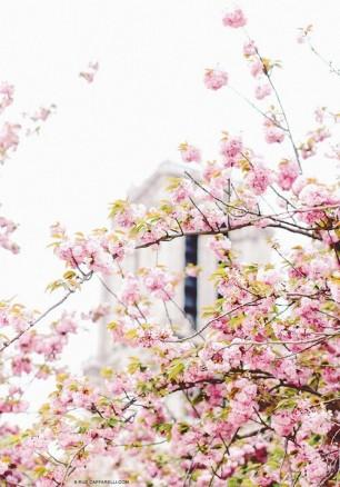 And a Bit of Sakura
