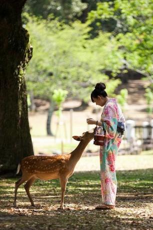 Cutie-Deer