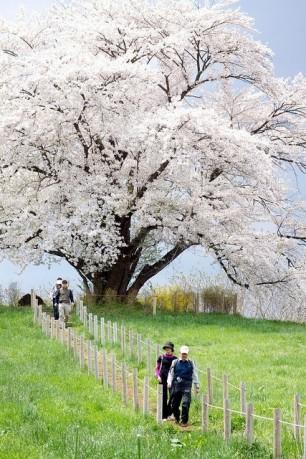 Beautiful-White-Tree