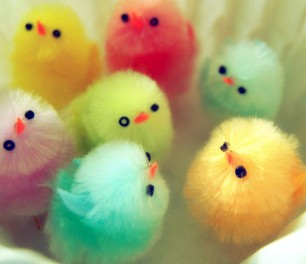 Colorful-Chicks