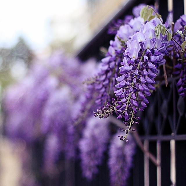 Pretty-Purple-Flowers