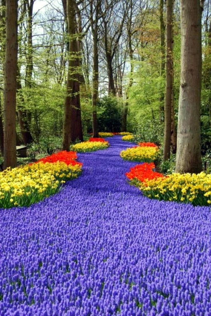 Purple-Path
