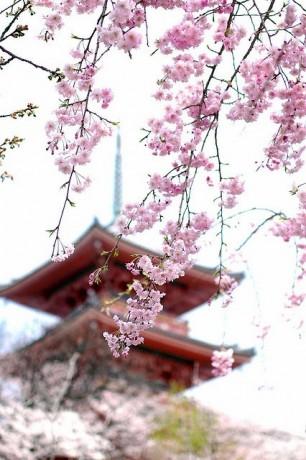 Sakura-Shrine