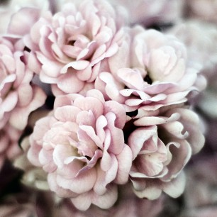 Such-White-Pink
