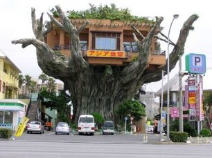 Awesome Crazy Tree Store