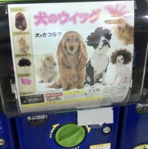 New Dog Style Gotcha